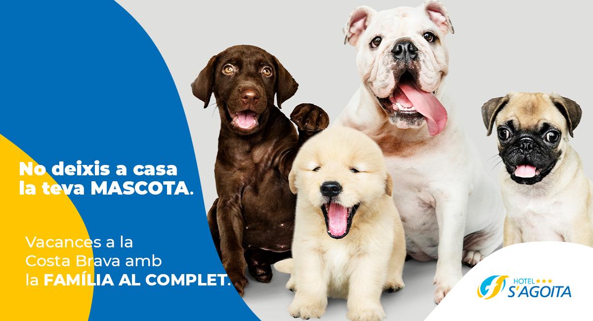Hotel pet friendly: Les raons per viatjar amb la teva mascota a la Costa Brava