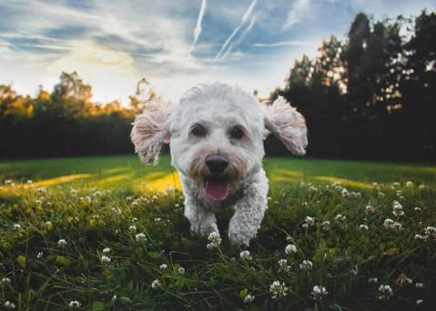 Consells per anar de vacances amb el teu gos